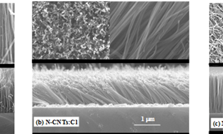 Nitrogenated Carbon Nanotubes Functionalized with Chlorine and Oxygen: Electronic and magnetic properties for electronic/magnetic device applications